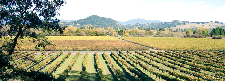 View of Dry Creek Valley, Sonoma County